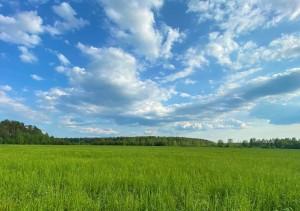 Коуч-сессия на зеленой траве